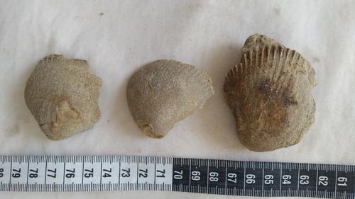 antiguo fosil coleccion antiques peruvian