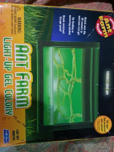 ants farm