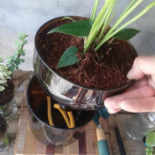 anturio little plant 22, maceta autorregante