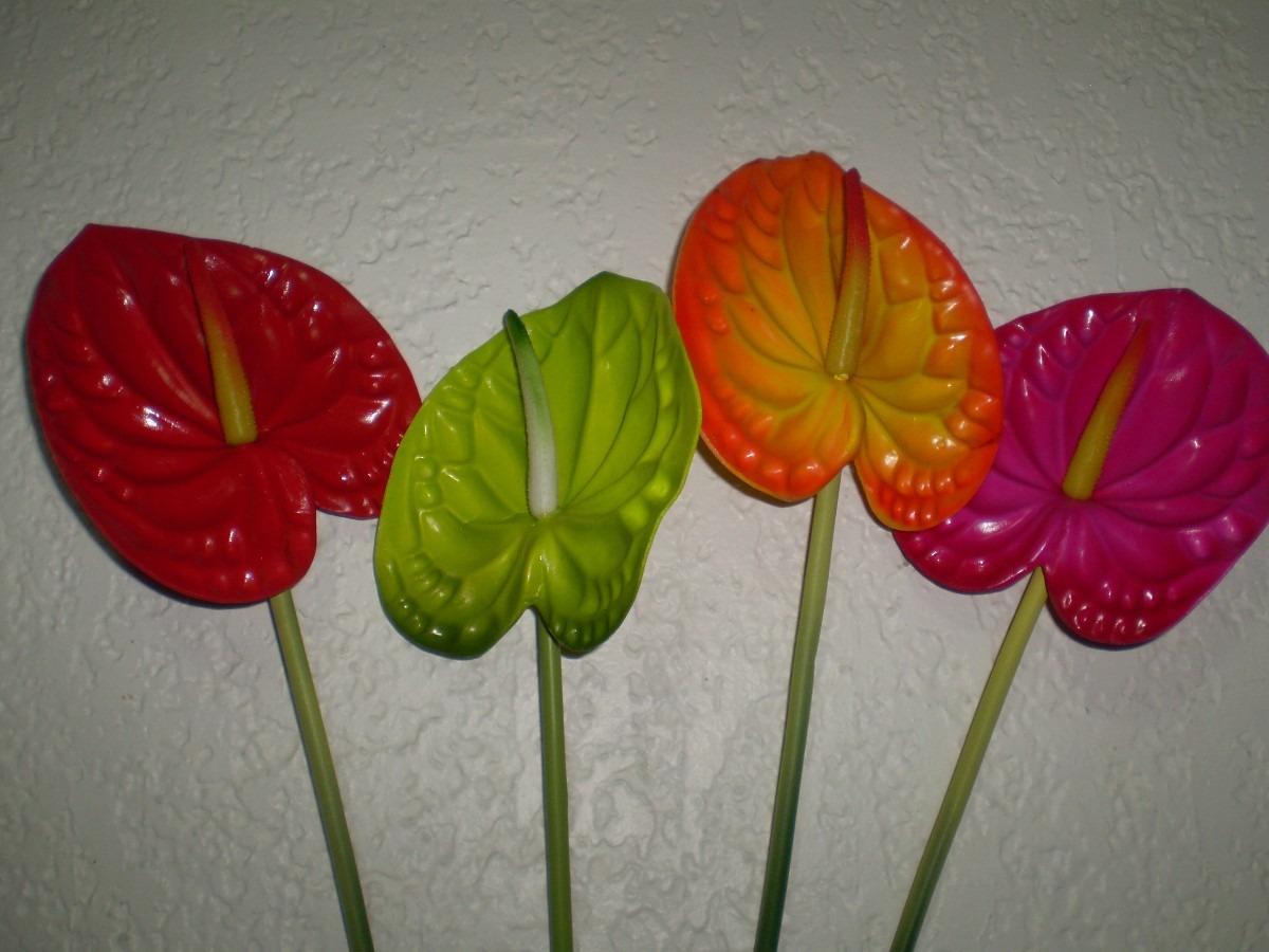 Anturios flores en mercado libre for Jardines de anturios