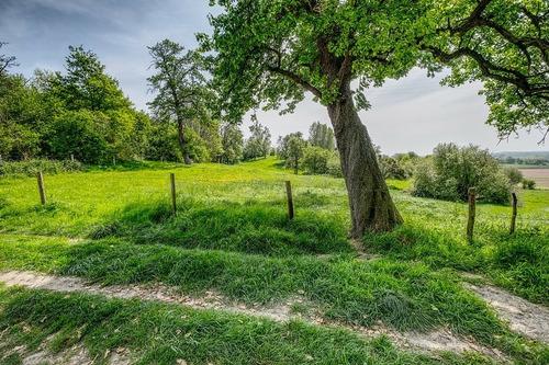 apadrina la compra de 1 terreno para proteger el agua y aire