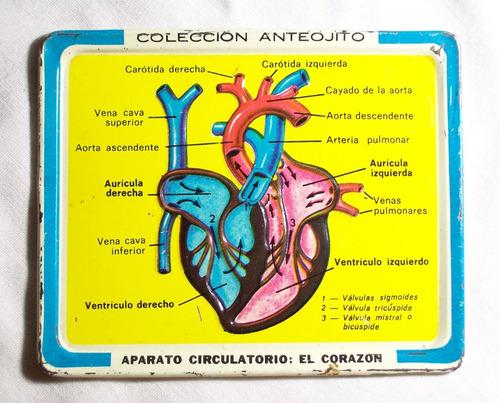 aparato circulatorio de chapa sorpresa revista anteojito