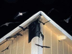 aparelho espanta rato e morcego bivolt zebu 150m²