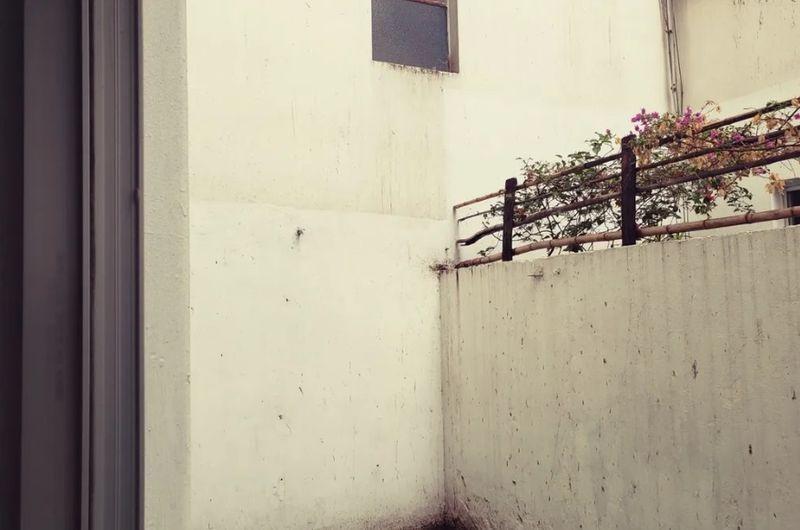 apartamento - reducto. 3 dormitorios, garaje y patio.