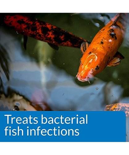 Api Pond Melafix Pond Fish Bacterial Infection Remedy Bot