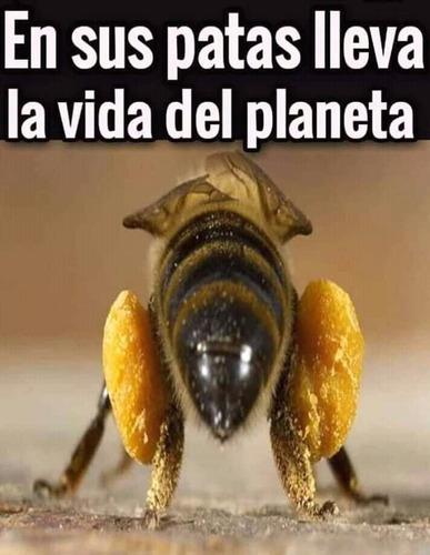 apicultor enjambres sacar