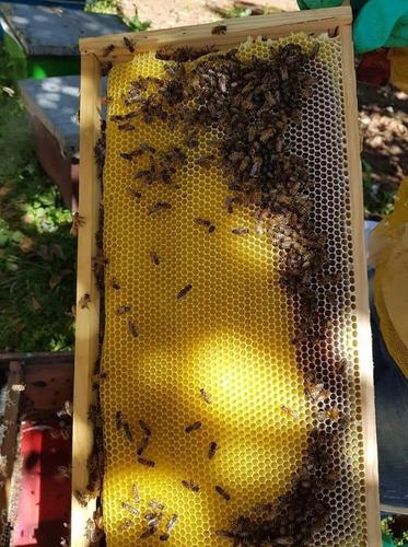 apicultura. núcleos. abejas. colmena