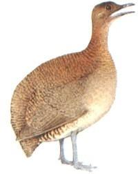apito pio de madeira jaó 30 apito ave animais silvestres