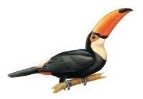 apito pio de madeira tucano 37 observação de aves e animais