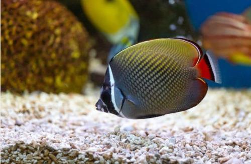 apostila aprenda tudo sobre criação de peixes ornamentais