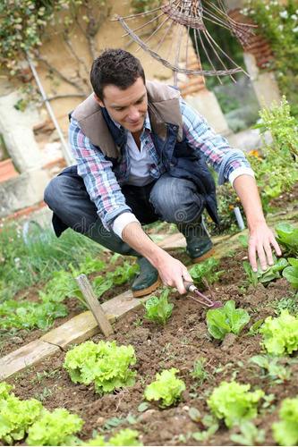 aprende como cuidar e ter uma horta na sua própria casa pdf!