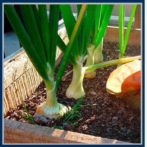 aprende hacer huerto casero cultivo siembra jardín terraza