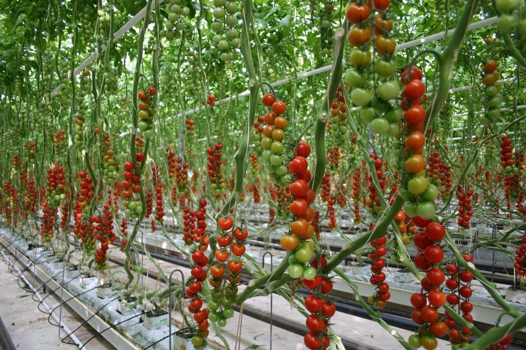 aprende hidroponia cultivos sembrar digital