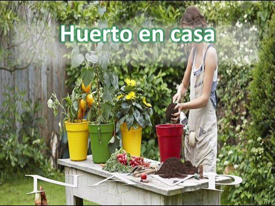 Aprende huerto maceta casa jard n cultivo siembra urbano - Huerto en casa macetas ...