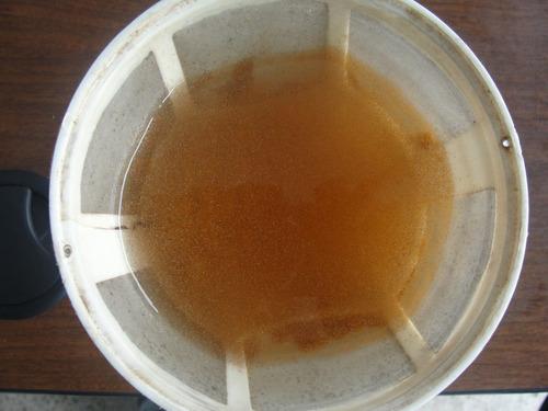 aqua quito - artemia viva para alevines y peces