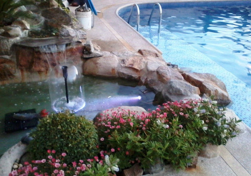 aqua quito - mantenimiento pecera, acuario o estanque