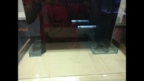 aquário 100x40x50 marinho
