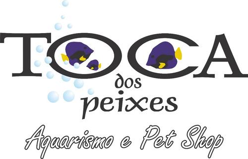 aquário bob esponja sbk106 15l - com enfeites e filtro