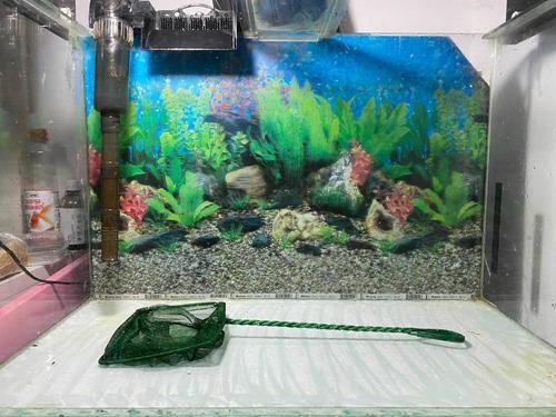 aquário completo c/ luminária,filtro e decoração