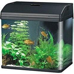 aquário curvo boyu mr-398 28l