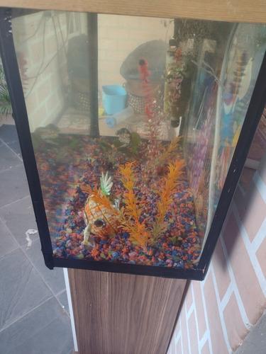 aquário de 80 litros em ótimo estado detalhes de uso do dia
