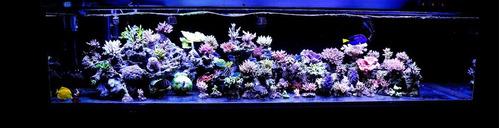 aquário peixes iluminação