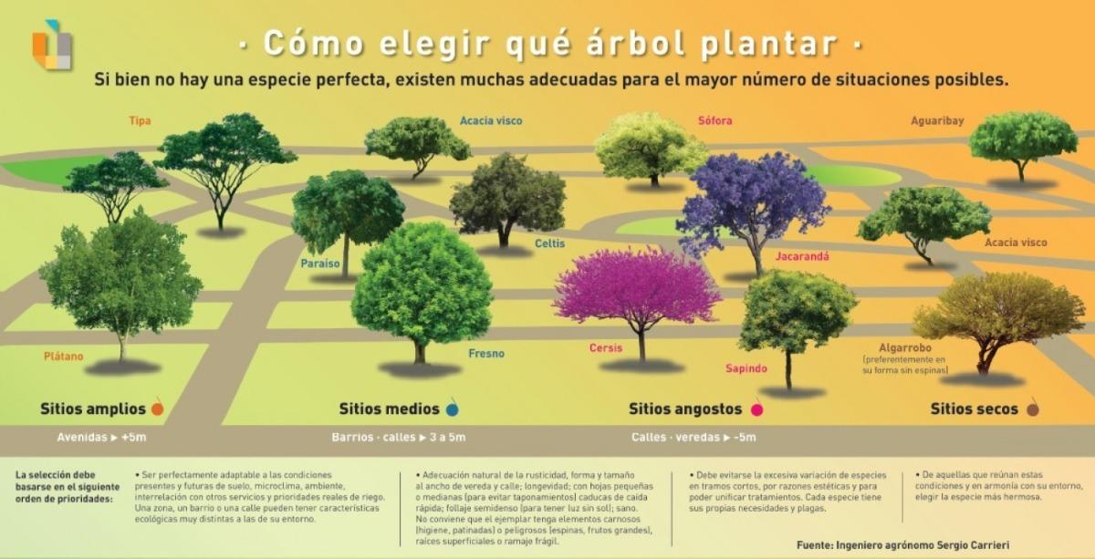 Arbol Acacia Visco Cultivo Organico Autoctono De Mendoza 490