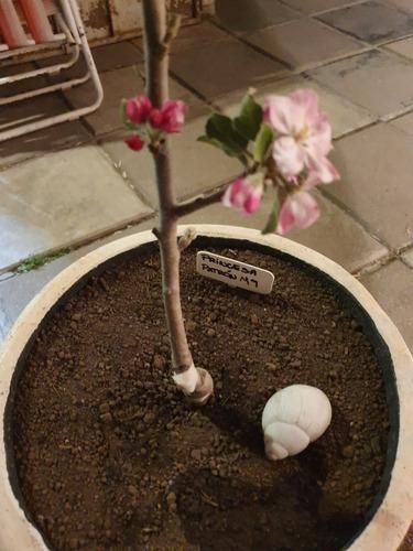arbol de manzana patron m9