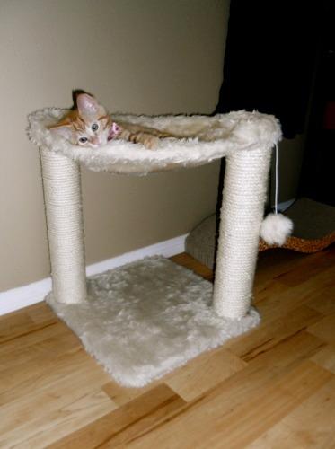 Arbol para gato descanso y juego felpa suave y rascador - Estanterias para gatos ...