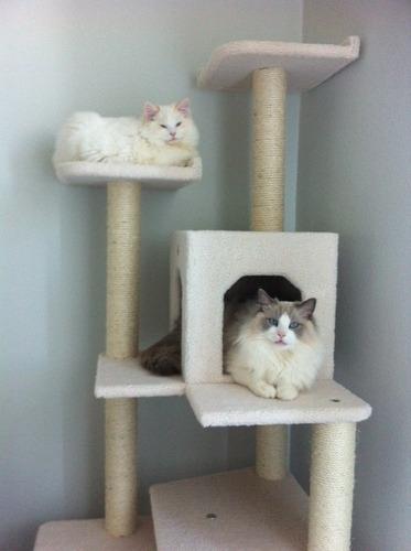 Arbol trepador rascador para gatos trepar casa 3 999 - Casa para gato ...