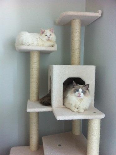 Arbol trepador rascador para gatos trepar casa 3 999 - Trepadores para gatos ...
