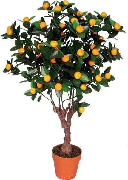 Rboles frutales ya produciendo en un s per precio 290 for Viveros frutales