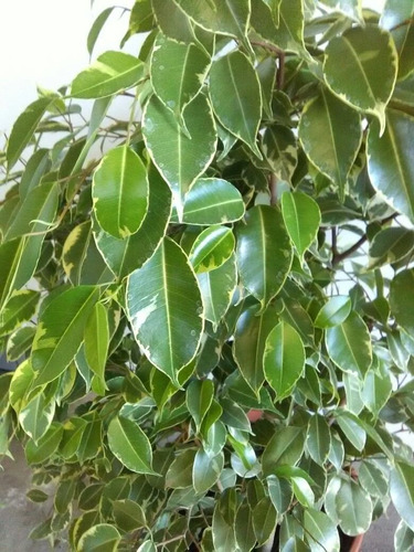 arboles plantas exterior