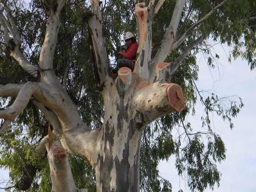 árboles, tala, poda