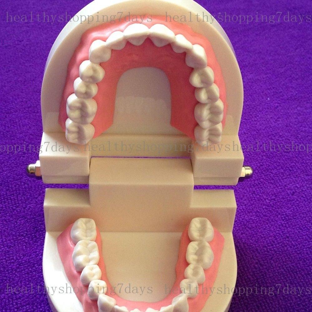 Arcada Dental Para Estudio Y Practica - $ 25.000 en
