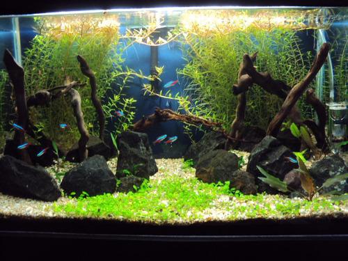arcilla roja ideal acuarios plantados nutriente importante