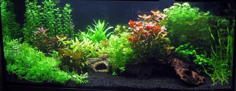 Arcilla roja para tu acuario plantado fuente de hierro for Fuentes con peces