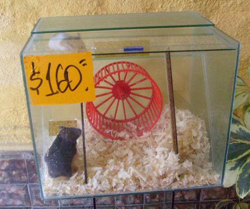ardillero c/ rueda y escalera  - ardillas ,mascotas, acuario