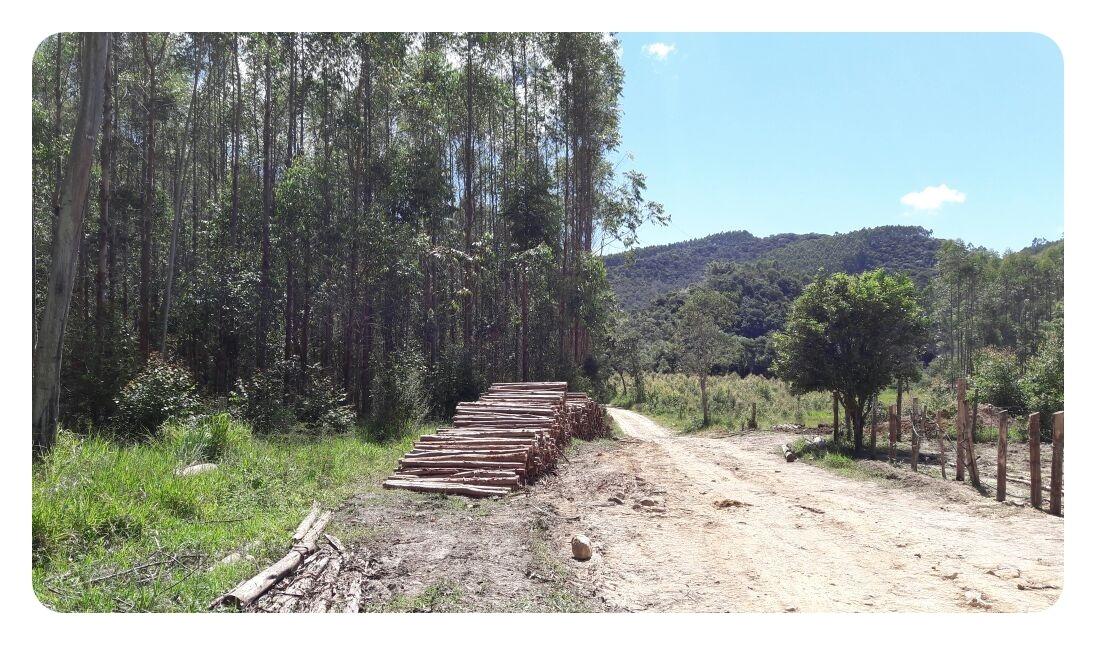 área de plantio de madeira
