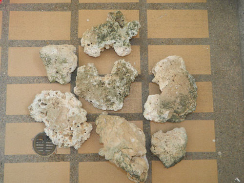 arena coralina y corales naturales 15kg cada uno
