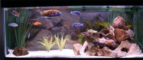 arena de cuarzo inerte para acuarios jardin zen x 10kg