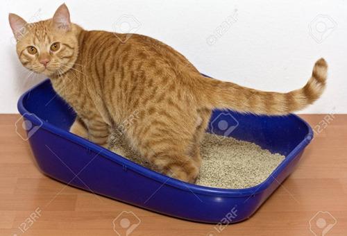 arena para gatos y cachorros