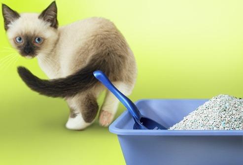 arenero para gatos + pala + juguete rascador