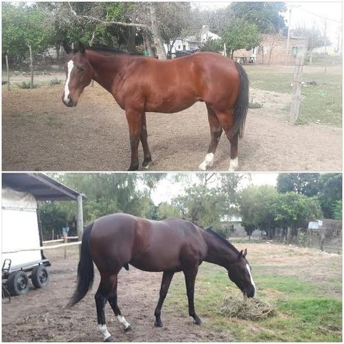 argentum plus - alimento para caballos de carrera 4kg