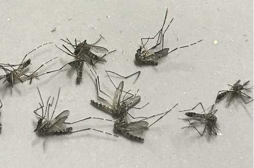 armadilha luminosa anti-estilhaço 220v mata mosca e mosquito