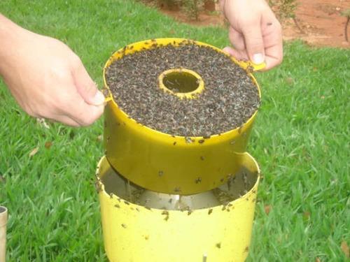 armadilha papa mosca - solução definitiva contra moscas