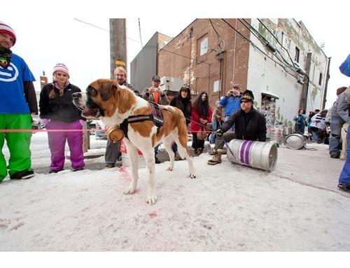 arnés ajustable tamaño mediano convert marrón perro ezydog