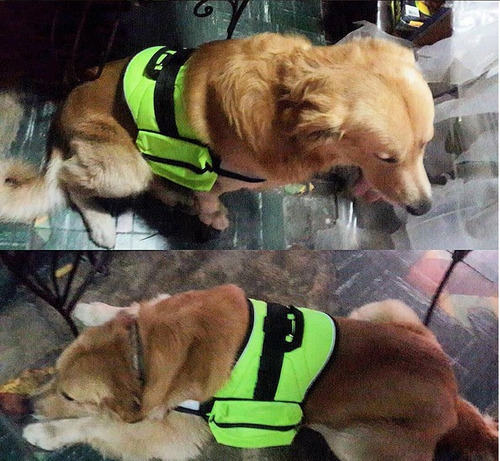 arnes canino modelo deluxe c/bolsos talla m