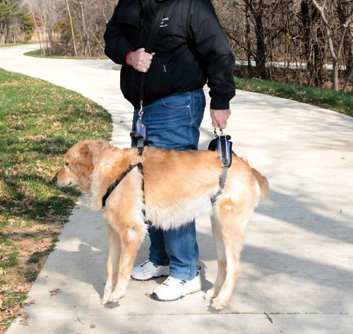 arnés completo perro grande - solvit petsafe