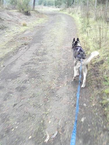 arnes de tiro canicross-bikejoring-mushing-lineas perros